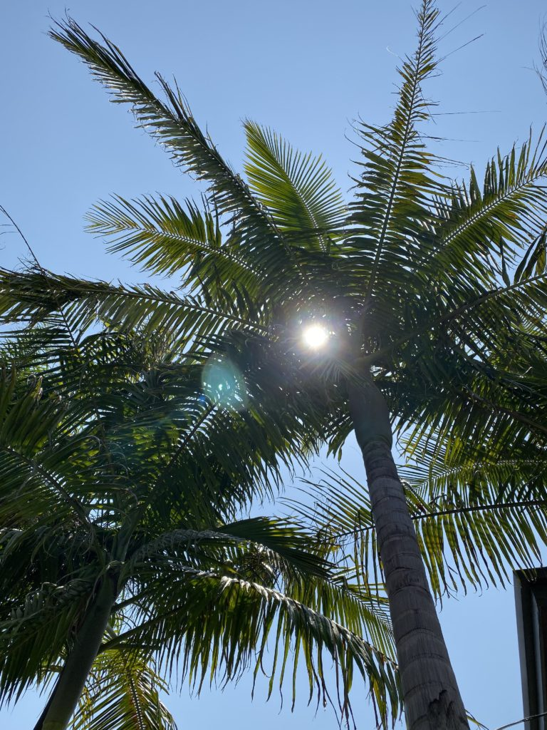 sun through a palm tree
