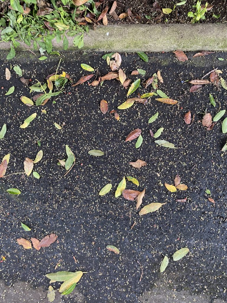 damp ground covered in leaves